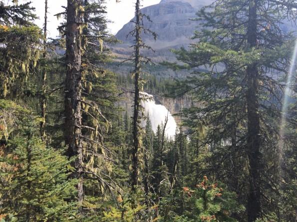 Berge, Wälder und Wasserfälle, der Berg Lake Trail hat alles (Foto: Lisa Feldmann)