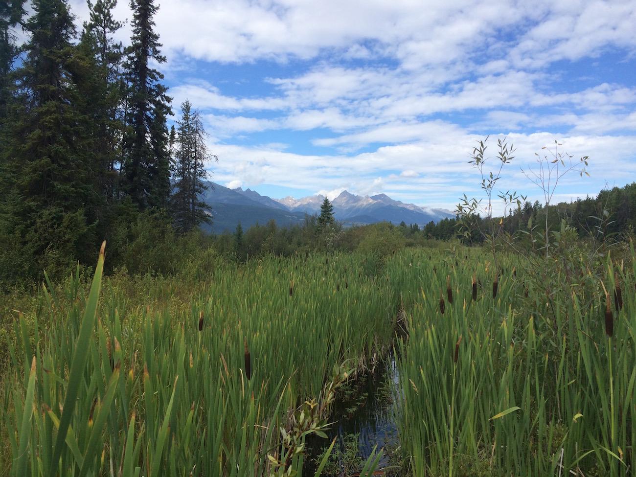 Sumpf und Berge: In Valemount wird Anstrengung mit wunderschönen Panoramen belohnt!